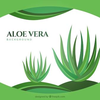Fundo abstrato com plantas de aloe vera