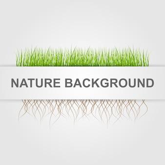 Fundo abstrato da natureza.