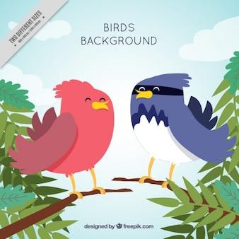 Fundo agradável dos pássaros tropicais