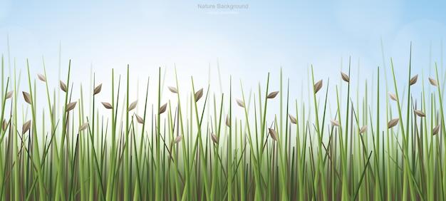 Fundo ao ar livre de campo verde com céu azul e luz suave de fundo.