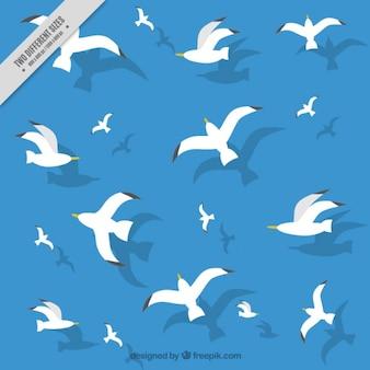 Fundo azul com gaivotas