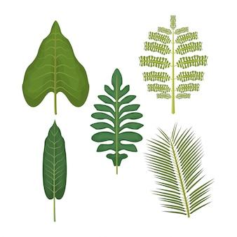Fundo branco com conjunto de folhas de palmeira