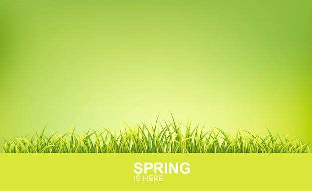 Fundo brilhante de primavera