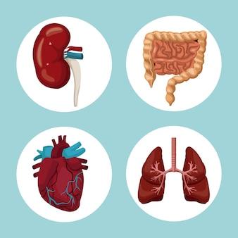 Fundo colorido com quadros circulares de órgãos do corpo humano