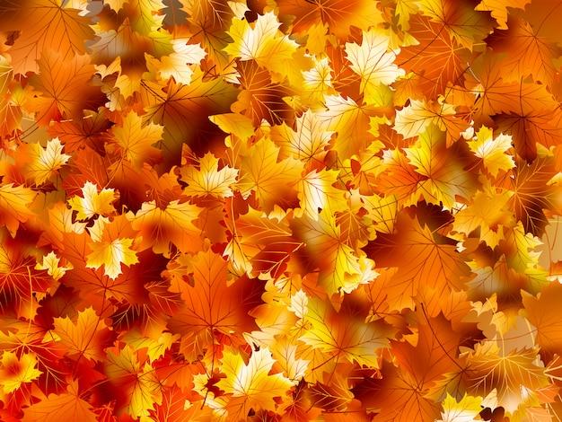 Fundo colorido de folhas de outono.