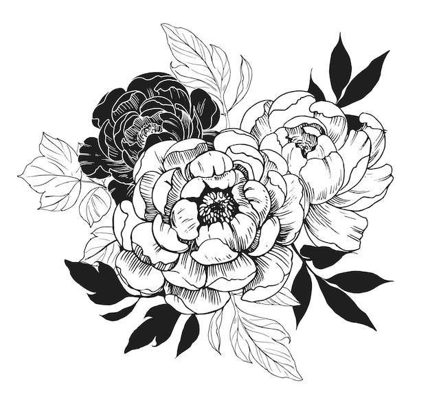 Fundo com flores peônia. ilustração desenhada à mão isolada no branco