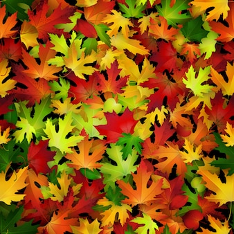 Fundo com folhas de outono coloridas.