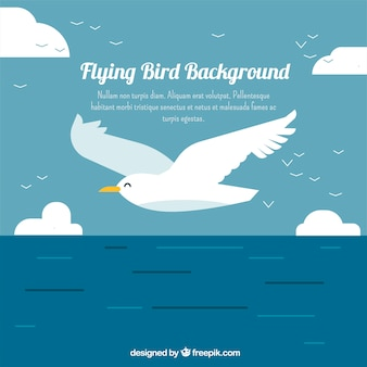Fundo com gaivota