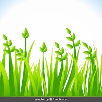 Fundo com grama verde