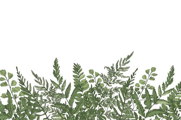 Fundo com lindas samambaias, ervas selvagens ou plantas herbáceas verdes crescendo na borda inferior