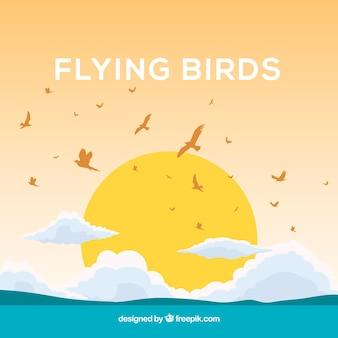 Fundo com pássaros e sol