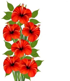 Fundo com um ramo de flores vermelhas.