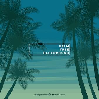 Fundo da árvore de palma