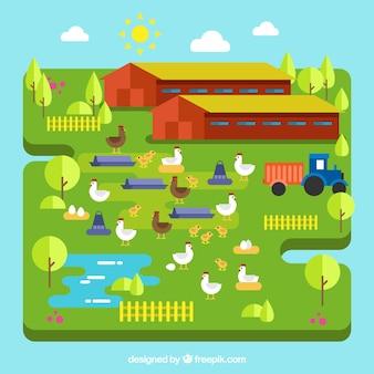 Fundo da exploração agrícola no projeto liso com galinhas