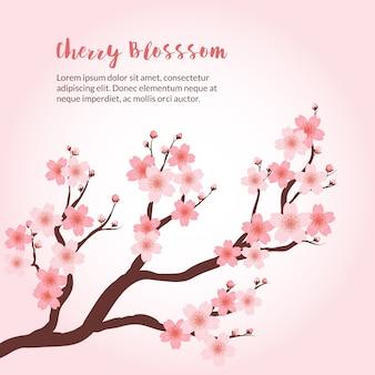 Fundo da flor de cereja