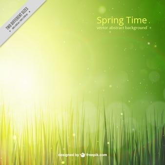Fundo da grama verde brilhante