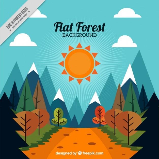 Fundo da paisagem ensolarada com um trajeto através das madeiras