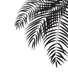 Fundo da silhueta da folha da palmeira bonita, vetor illustrat