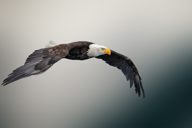 Fundo de animal poligonal geométrica águia