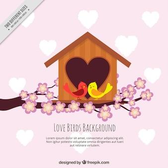Fundo de aves com a casa bonita de coração
