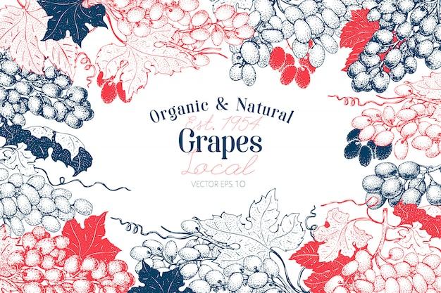 Fundo de baga de uva. entregue a ilustração tirada da fruta do vetor na placa de giz. estilo botânico retro gravado