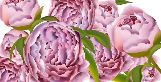 Fundo de cartão de flores de peônia rosa