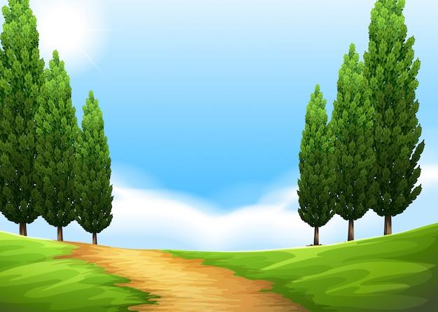 Fundo de cena de natureza com trilha e pinheiro