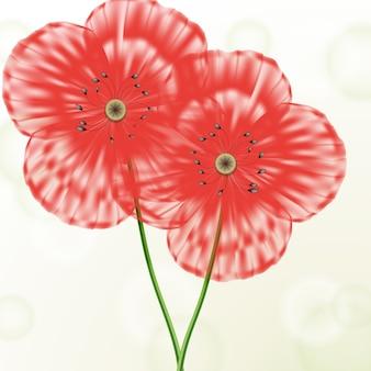 Fundo de conceito floral primavera com papoilas vermelhas