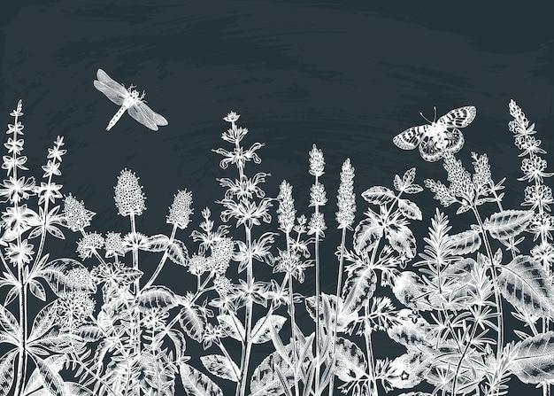 Fundo de ervas de verão esboçado à mão no quadro-negro