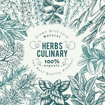 Fundo de ervas e especiarias culinário. mão desenhada retrô ilustração botânica.