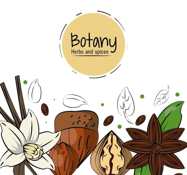 Fundo de ervas e especiarias da botânica