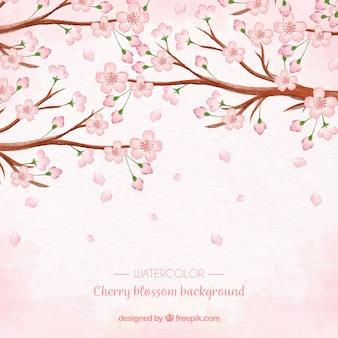 Fundo de flor de cerejeira com flores de aguarela