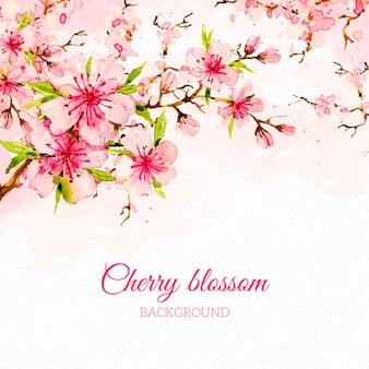 Fundo de flor de cerejeira em aquarela
