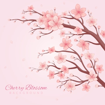 Fundo de flor de cerejeira handdrawn