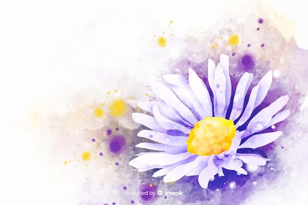 Fundo de flor linda margarida aquarela