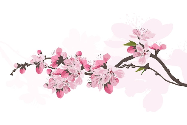 Fundo de flores de sakura. fundo branco isolado da flor de cerejeira.