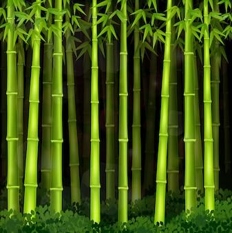 Fundo de floresta de bambu à noite