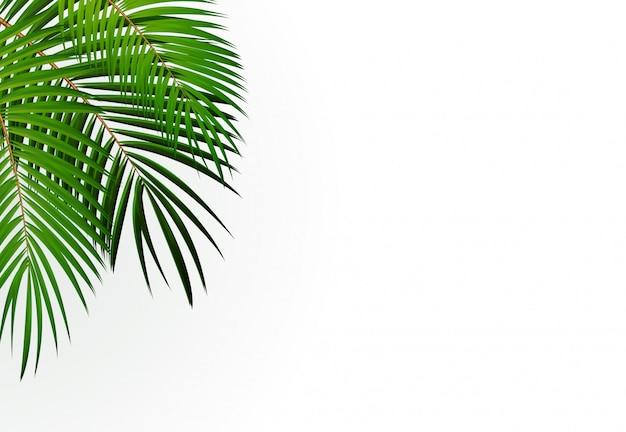 Fundo de folha de palmeira