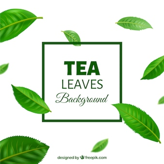 Fundo de folhas de chá em estilo realista