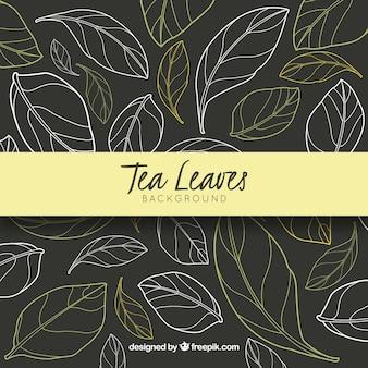 Fundo de folhas de chá na mão desenhado