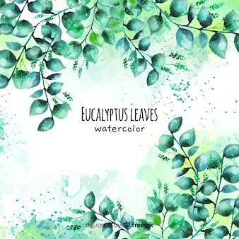 Fundo de folhas de eucalipto em aquarela