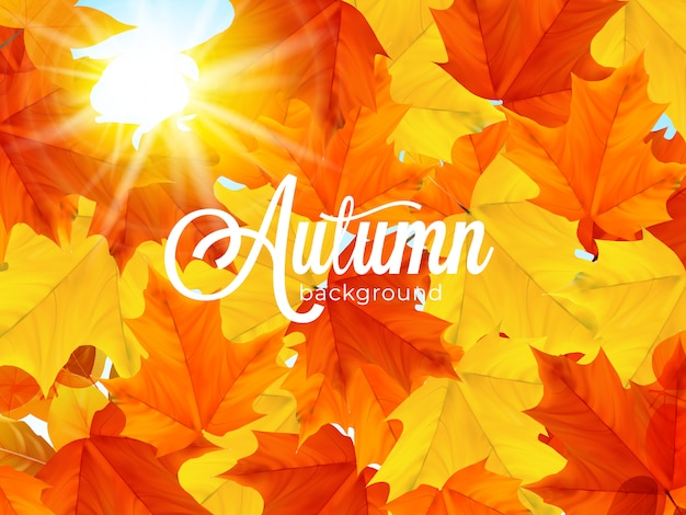 Fundo de folhas de outono quente iluminado pelo sol