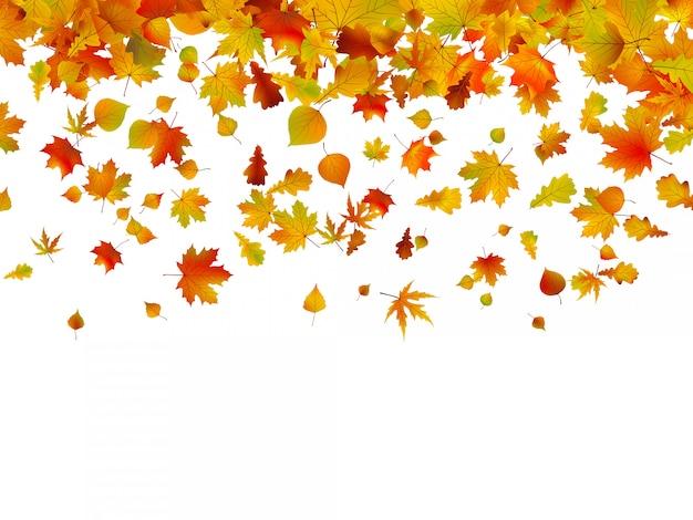 Fundo de folhas de outono.
