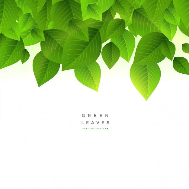 Fundo de folhas verdes com espaço de texto