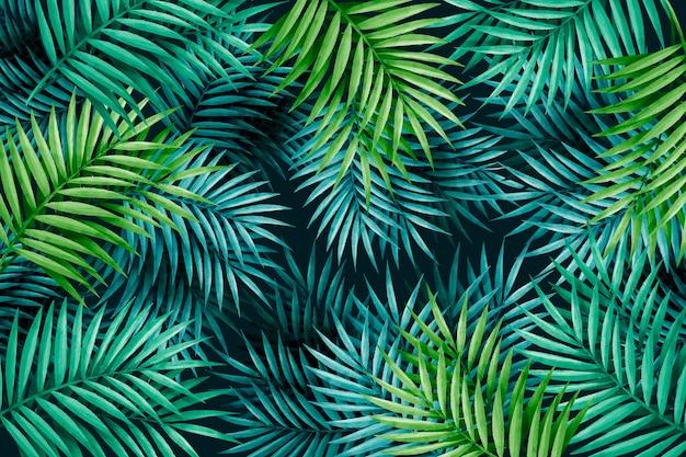 Fundo de folhas verdes exóticas grandes