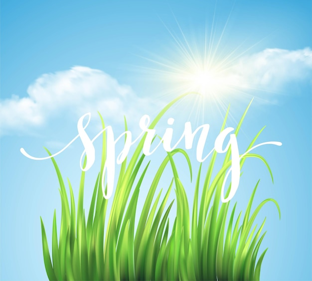 Fundo de grama verde frash spring. ilustração