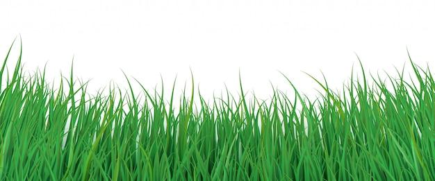 Fundo de grama verde. rodapé ecológico. fronteira da natureza para você projetar