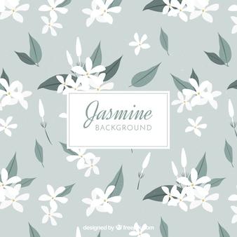 Fundo de jasmim com flores brancas