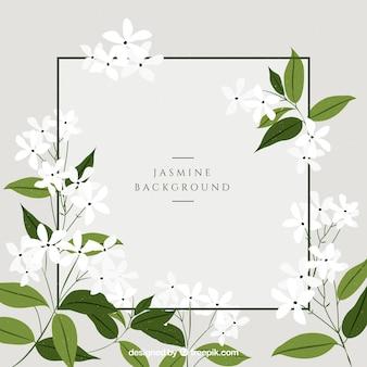 Fundo de jasmim com lindas flores