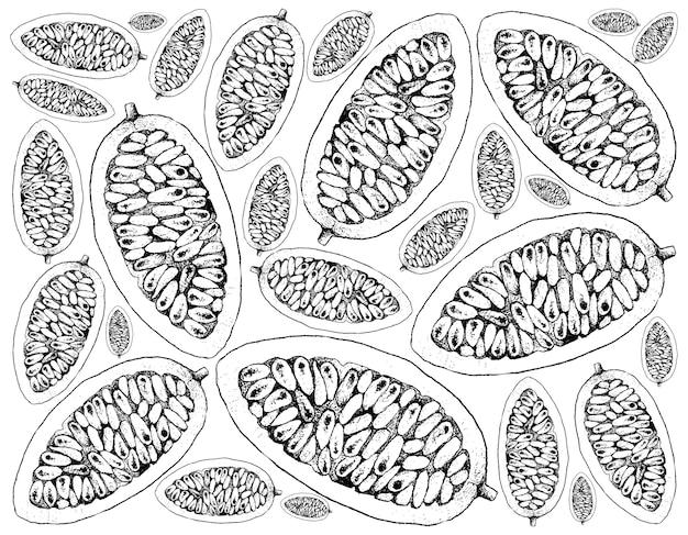 Fundo de mão desenhada de banana fresca de maracujá